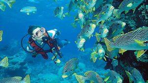 Voyage plongee découvrir la faune