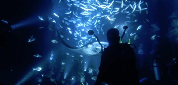 Plongée de nuit avec des pélagiques