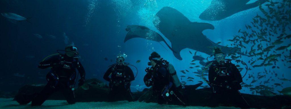 Voyage plongée avec les requins baleine