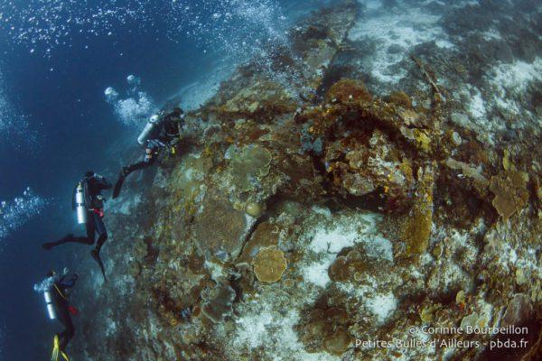 Plongée sur épave de la seconde guerre mondiale à Rajat Ampat en Indonésie