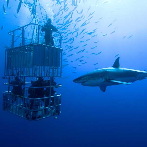 tour operator plongée avec les requins