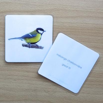 imagier oiseaux