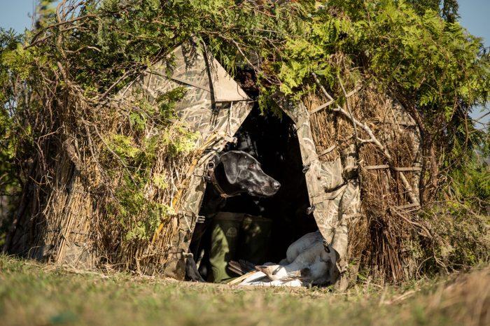 Cache de chasse à l'oie blanche - Québec