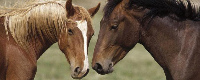 Rutas para montar a caballo en Asturias, Teverga
