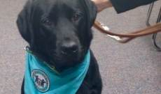 LACASA Adopts Canine Advocate
