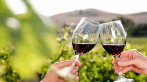 brindis-vino-experiencias-cultura