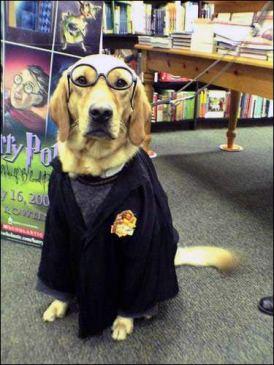 20-Harry-Potter - copia