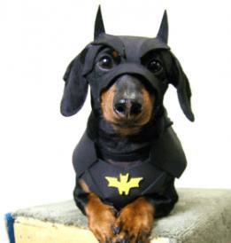 best-batman-dog-costume-281x295 - copia