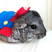 superhero_pet_cosplay_02