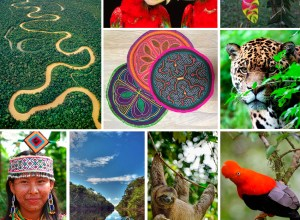 Inspiration board The colors of the Amazon Rainforest