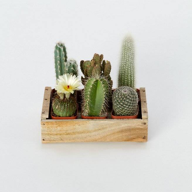 5 plants to decorate your kitchen that you should not miss 01