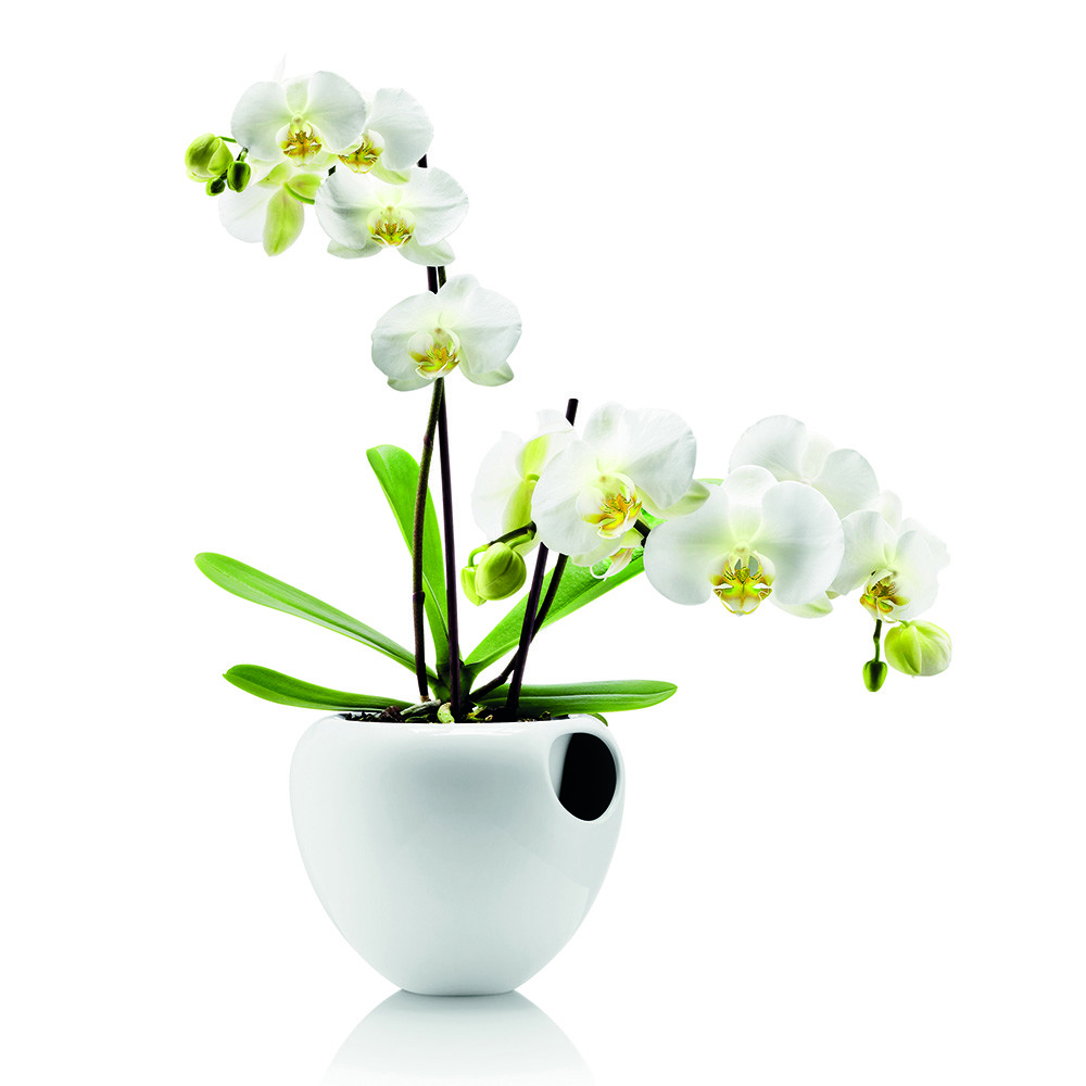 8 decorative vases that are ideal for your orchids 04