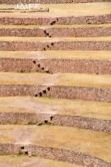 Steps in Moray Circles