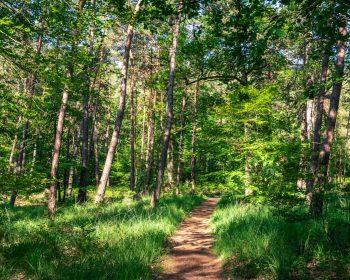 Où courir en forêt de Fontainebleau ? 24
