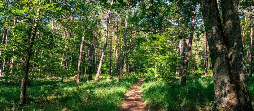 Où courir en forêt de Fontainebleau ? 1