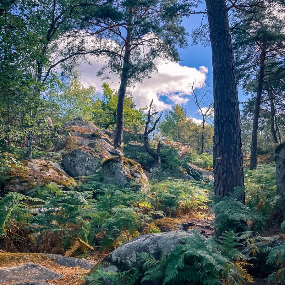 Où courir en forêt de Fontainebleau ? 84