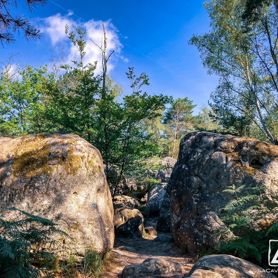 Où courir en forêt de Fontainebleau ? 59
