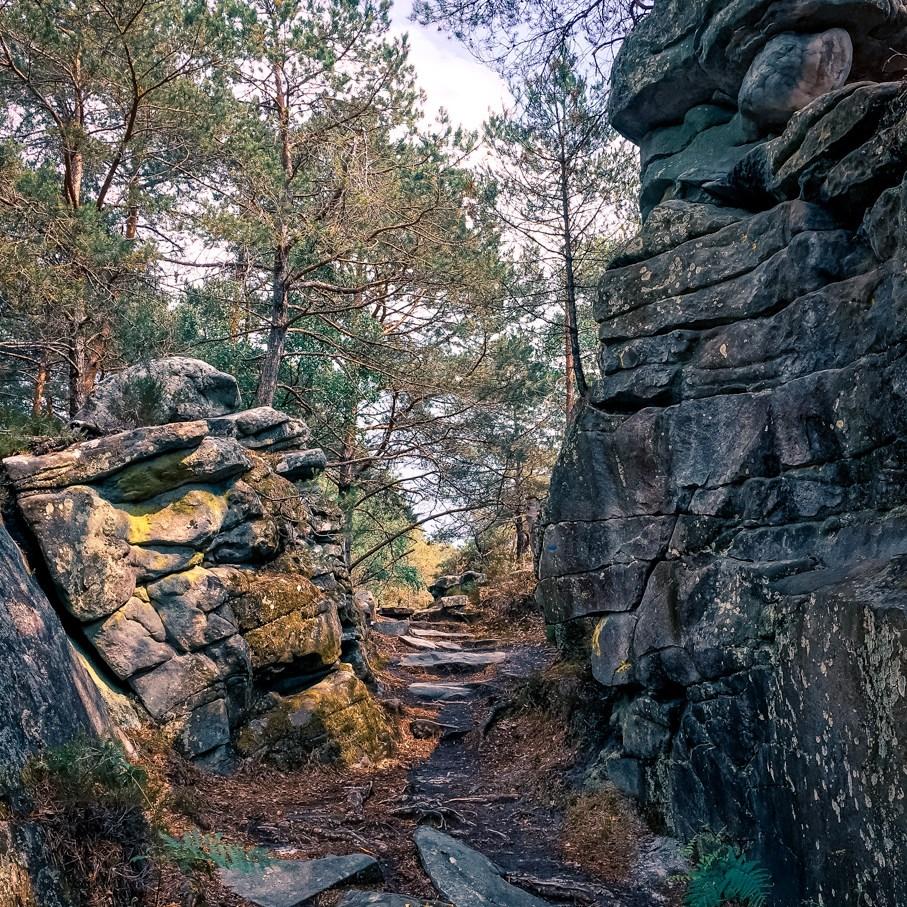 Où courir en forêt de Fontainebleau ? 33
