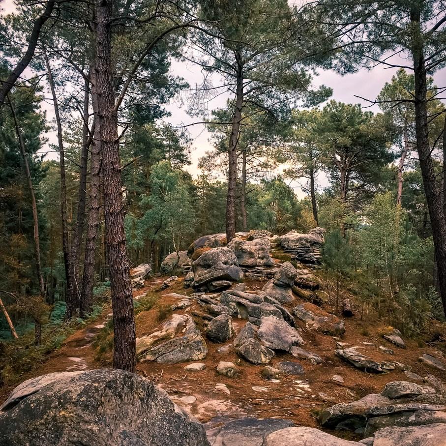 Où courir en forêt de Fontainebleau ? 34