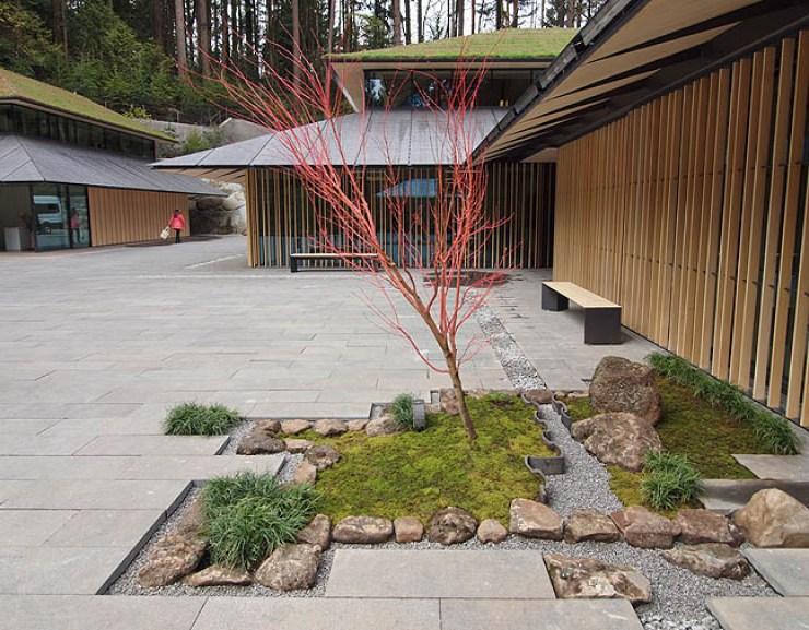 JG_Kuma_red_tree_sm