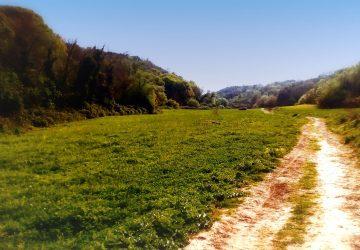 A passeggio nella Riserva Naturale dell'Insugherata