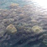lacne dovolenky koral