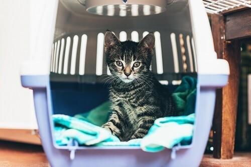 sa caisse de transport pour chat