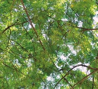 Déchets verts, la Compostière de l'Aube