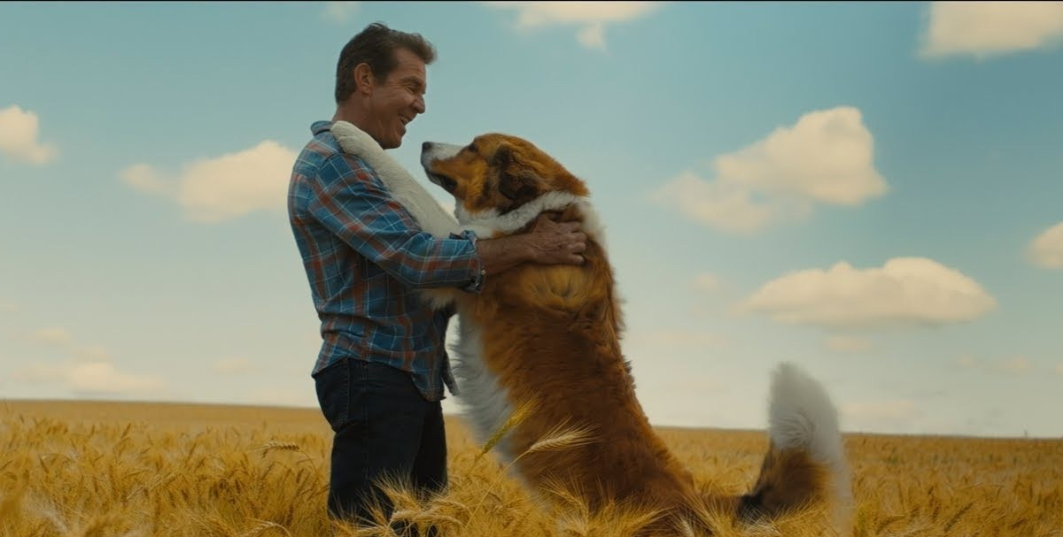 A Dog's Journey estrena su primer trailer