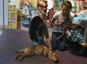 Perro recibe cariño por estudiantes