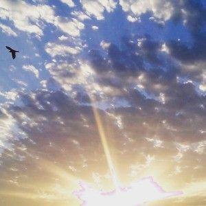 cielo ave