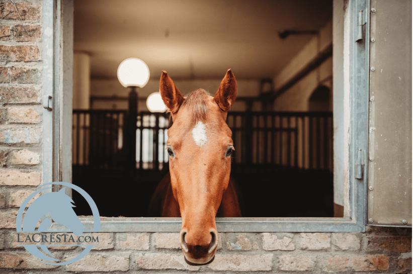 La Cresta Real Estate - 5 Tips for Selling a Horse Property