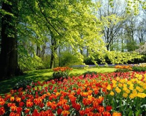 Primavera Ayurvedica