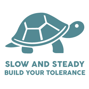 slow and steady turtle