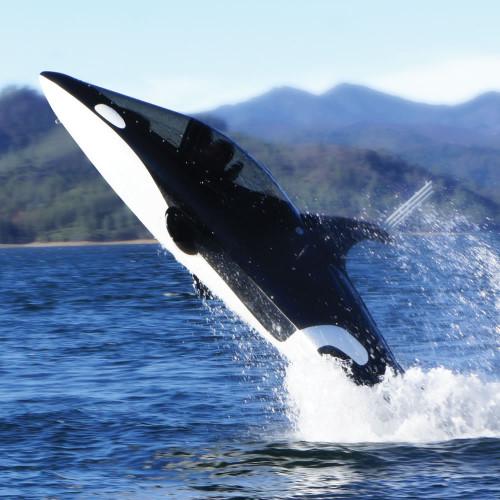 Orca Submarine