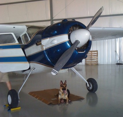 Stephanie Stephanson German Shepherd, Pilot, after his first 195 ride.