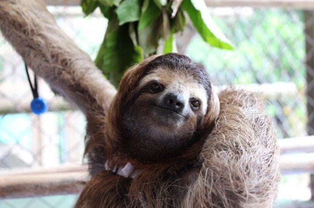 The sloth sanctuary, Costa Rica