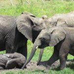 [Interview] Animal volunteering in Africa – Part one