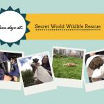 Secret World Wildlife Rescue open days