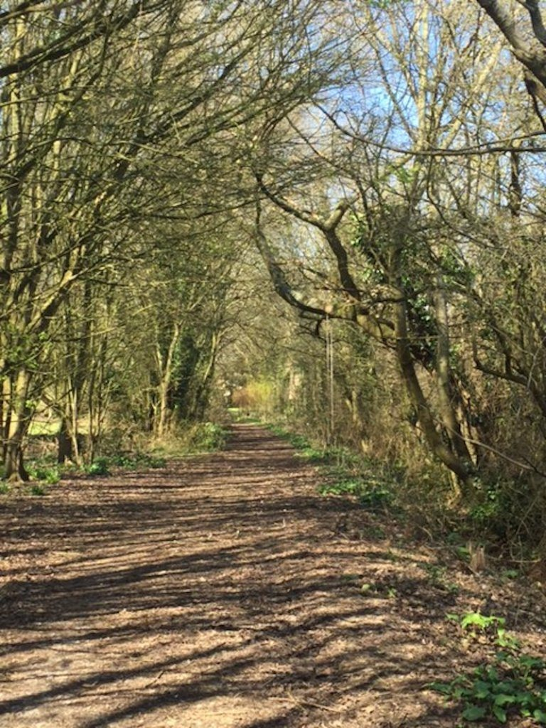 I found a gorgeous little woodland walk on the outskirts of my village.