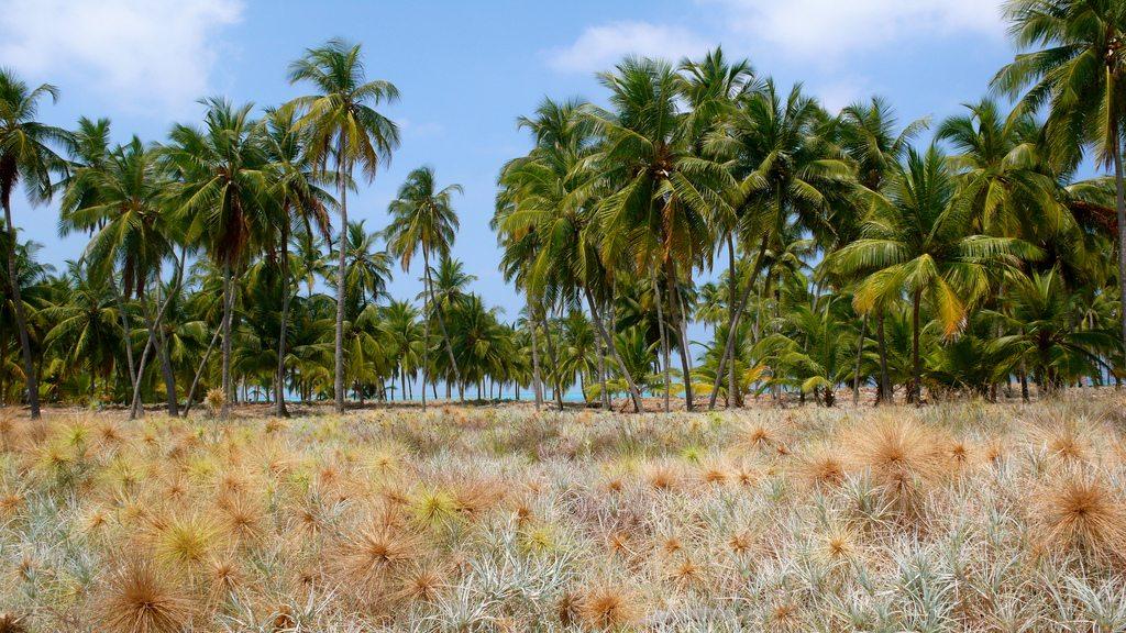 Palm Trees, Photo by Jennifer, CC BY-ND 2.0