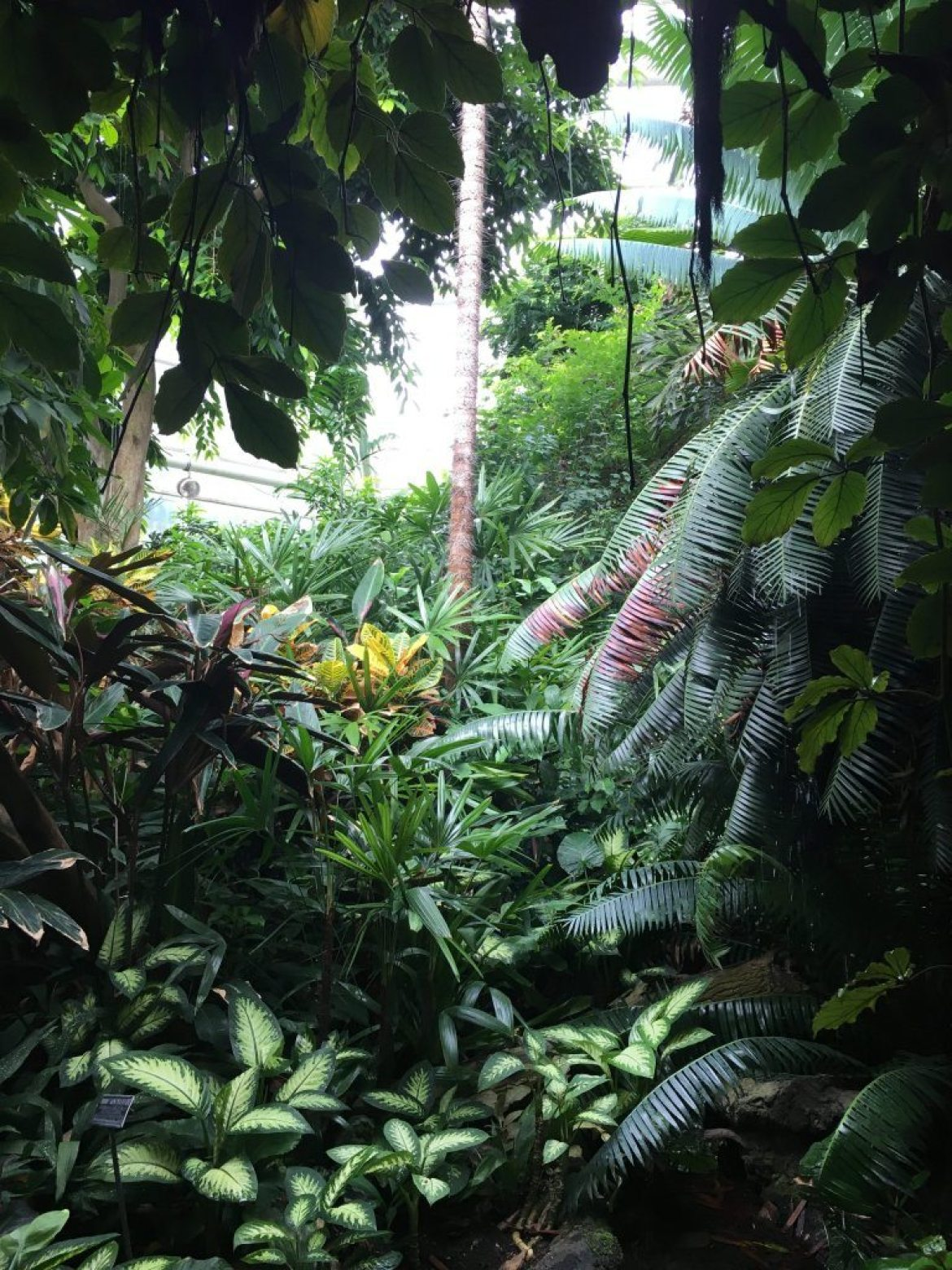 Flora and fauna inside the Tropical Pavilion