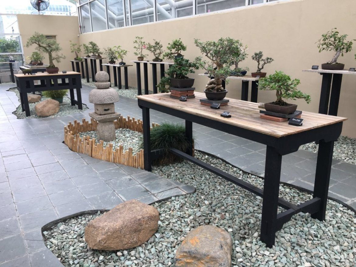 The Bonsai Museum at the Steinhardt Conservatory
