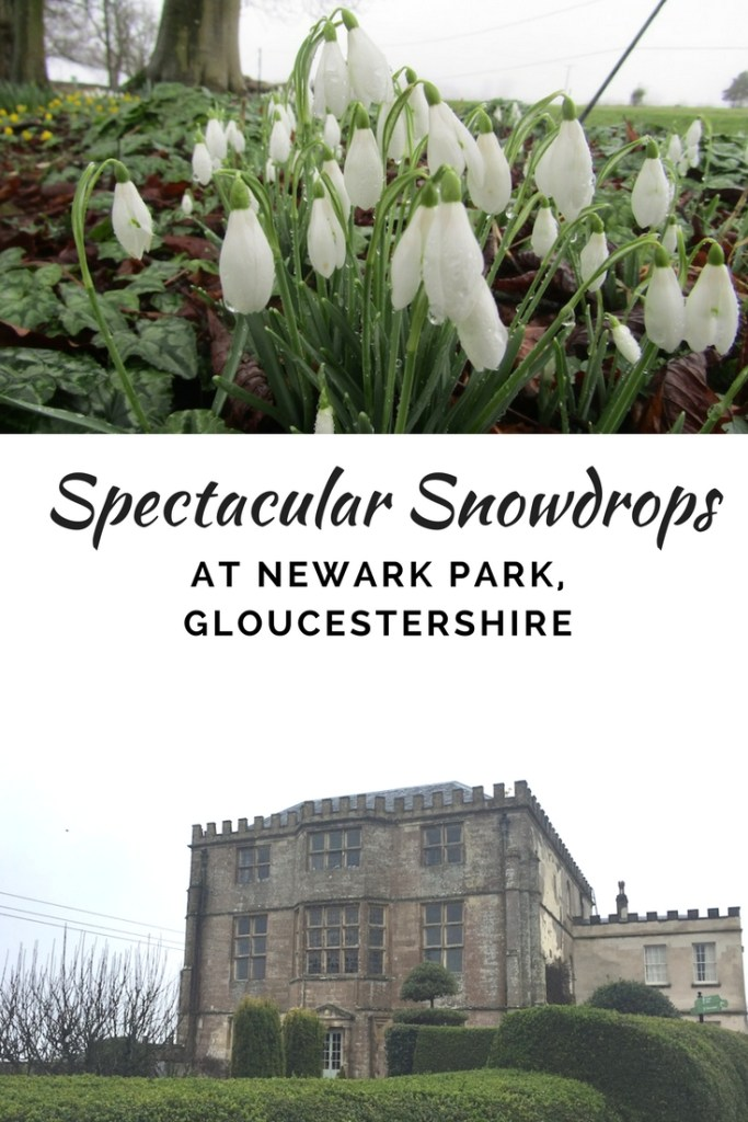 Snowdrops at Newark House Gloucestershire   Ladies What Travel pin 1