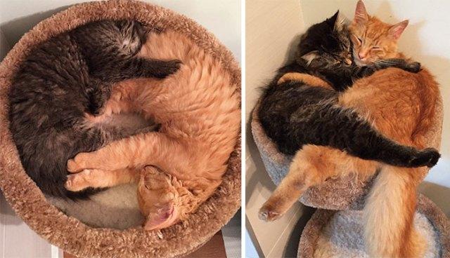 sleeping-together