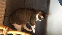 kattencafe-kopjes-8
