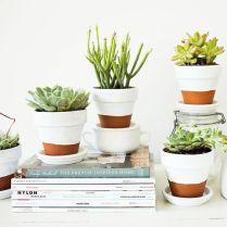 http://offbeatandinspired.com/2013/05/30/painted-pots-succulents/