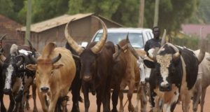Taraba Emir issued 30-day ultimatum to herdsmen in the state to vacate forests