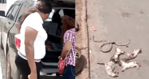 Snake and 4 cats killed after they were found living in woman's car