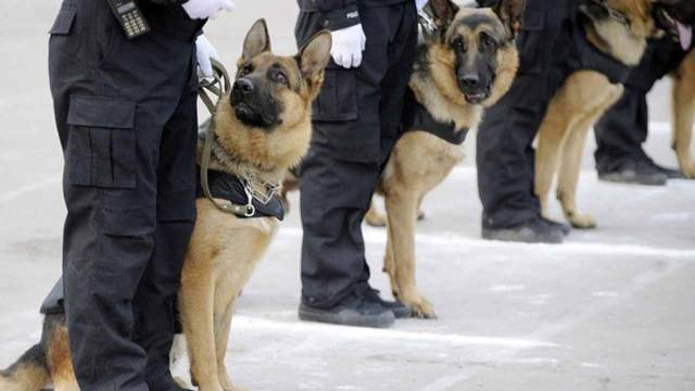 FG to spend N658m for deployment of sniffer dogs in Lagos, Abuja airports